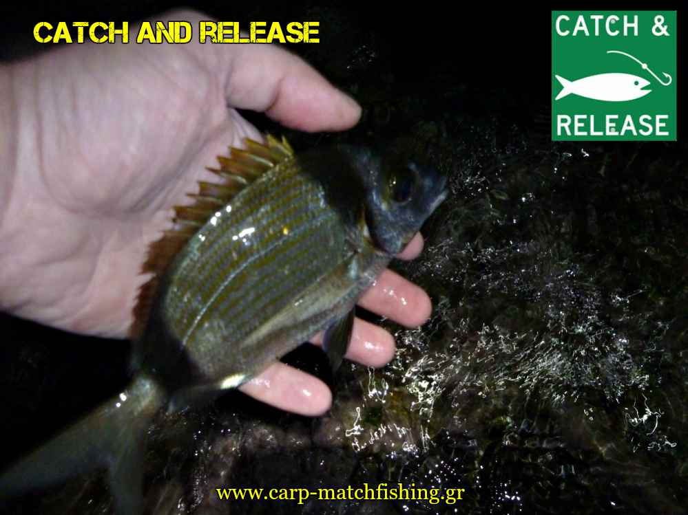 catch and release aulias carpmatchfishing